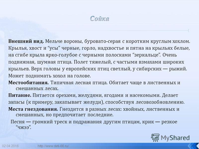 02.04.201620 сойка http://www.deti-66.ru/