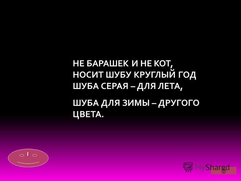 НЕ БАРАШЕК И НЕ КОТ, НОСИТ ШУБУ КРУГЛЫЙ ГОД ШУБА СЕРАЯ – ДЛЯ ЛЕТА, ШУБА ДЛЯ ЗИМЫ – ДРУГОГО ЦВЕТА. IIII