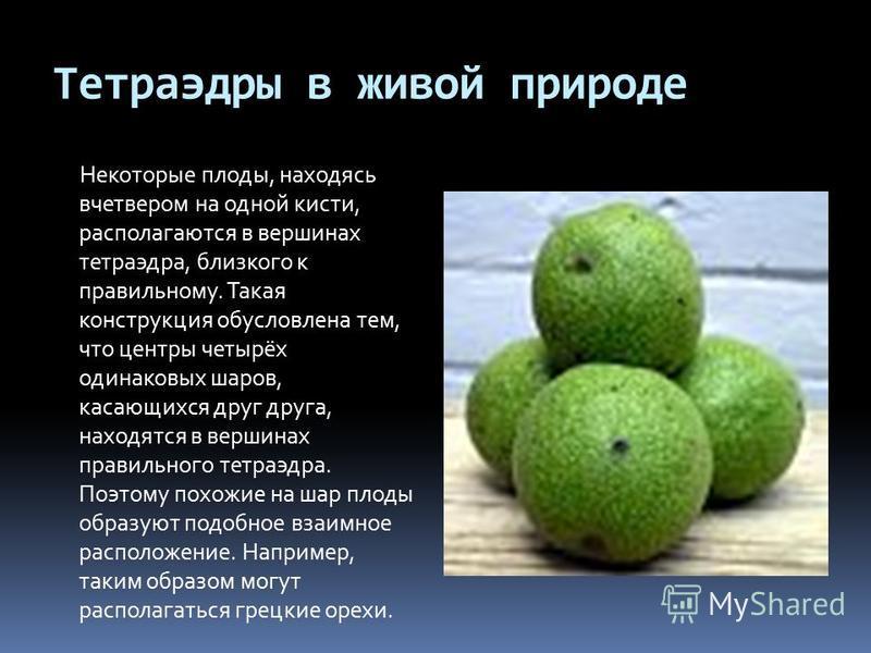Тетраэдры в живой природе Некоторые плоды, находясь вчетвером на одной кисти, располагаются в вершинах тетраэдра, близкого к правильному. Такая конструкция обусловлена тем, что центры четырёх одинаковых шаров, касающихся друг друга, находятся в верши