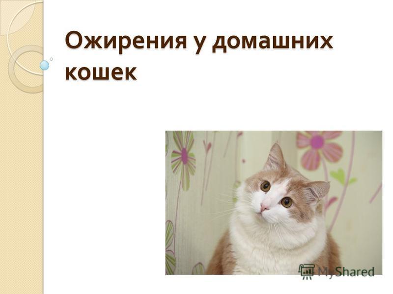 Ожирения у домашних кошек