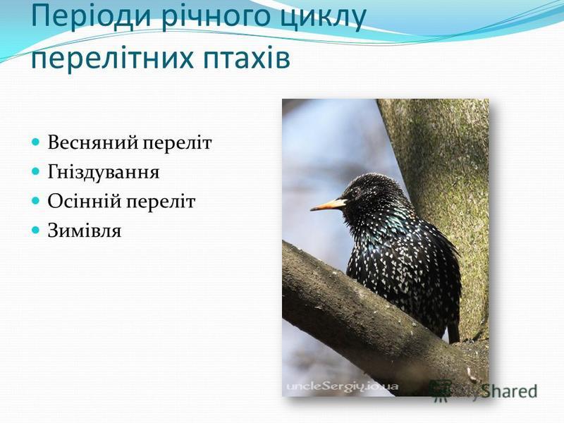 Періоди річного циклу перелітних птахів Весняний переліт Гніздування Осінній переліт Зимівля