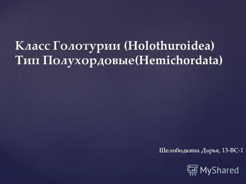 Класс Голотурио (Holothuroidea) Тип Полухордовые(Hemichordata) Шелободкина Дарья, 13-ВС-1