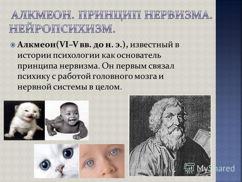 Алкмеон(VI–V вв. до н. э.), известный в истории психологии как основатель принципа нервизма. Он первым связал психику с работой головного мозга и нервной системы в целом.