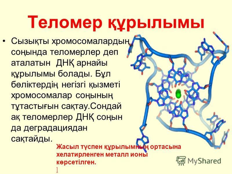 Теломер құрылымы Сызықты хромосомалардың соңында теломерлер деп аталатын ДНҚ арнайы құрылымы болады. Бұл бөліктердің негізгі қызметі хромосомалар соңының тұтастығын сақтау.Сондай ақ теломерлер ДНҚ соңын да деградациядан сақтайды. Жасыл түспен құрылым