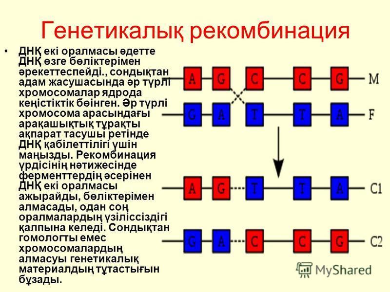 Генетикалық рекомбинация ДНҚ екі оралмасы әдетте ДНҚ өзге бөліктерімен әрекеттеспейді., сондықтан адам жасушасында әр түрлі хромосомалар ядрода кеңістіктік бөінген. Әр түрлі хромосома арасындағы арақашықтық тұрақты ақпарат тасушы ретінде ДНҚ қабілетт