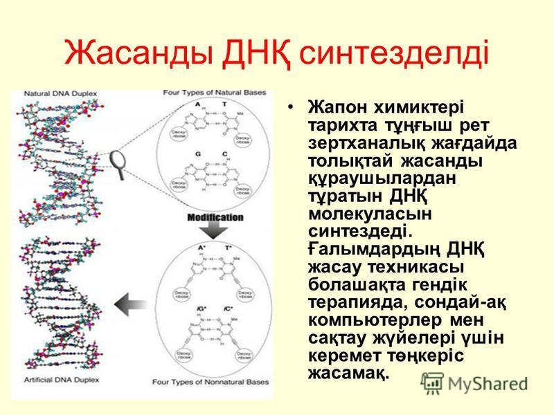 Жасанды ДНҚ синтезделді Жапон химиктері тарихта тұңғыш рет зертханалық жағдайда толықтай жасанды құраушылардан тұратын ДНҚ молекуласын синтездеді. Ғалымдардың ДНҚ жасау техникасы болашақта гендік терапияда, сондай-ақ компьютерлер мен сақтау жүйелері