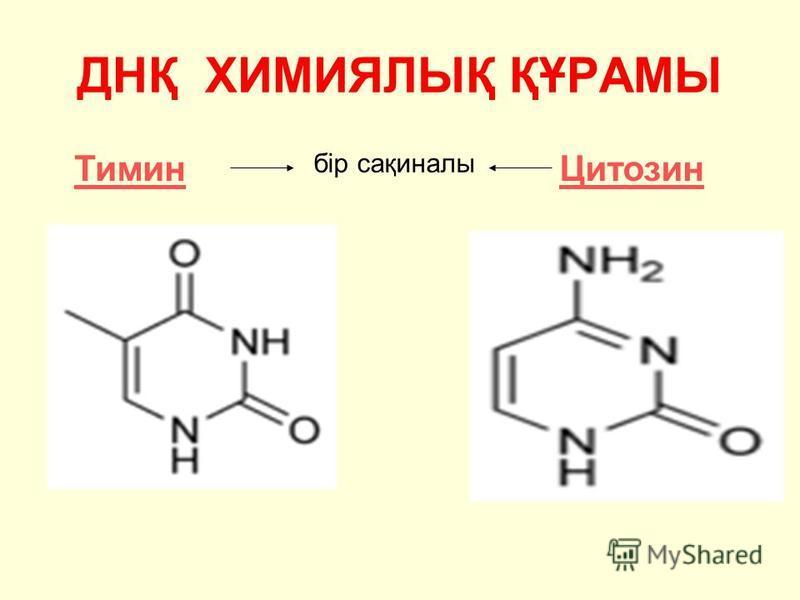 ДНҚ ХИМИЯЛЫҚ ҚҰРАМЫ ТиминЦитозин бір сақиналы