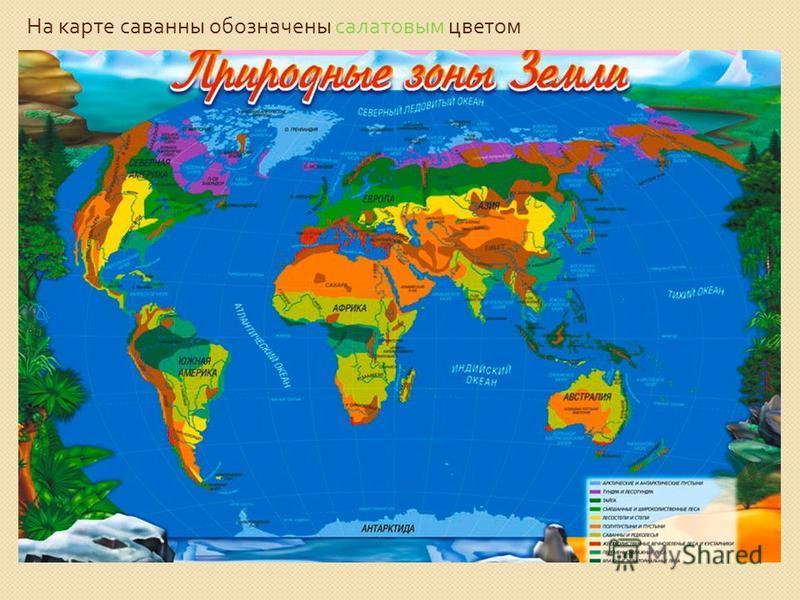 На карте саванны обозначены салатовым цветом