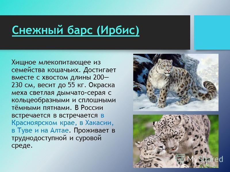 Снежный барс (Ирбис) Хищное млекопитающее из семейства кошачьих. Достигает вместе с хвостом длины 200 230 см, весит до 55 кг. Окраска меха светлая дымчато-серая с кольцеобразными и сплошными тёмными пятнами. В России встречается в встречается в Красн