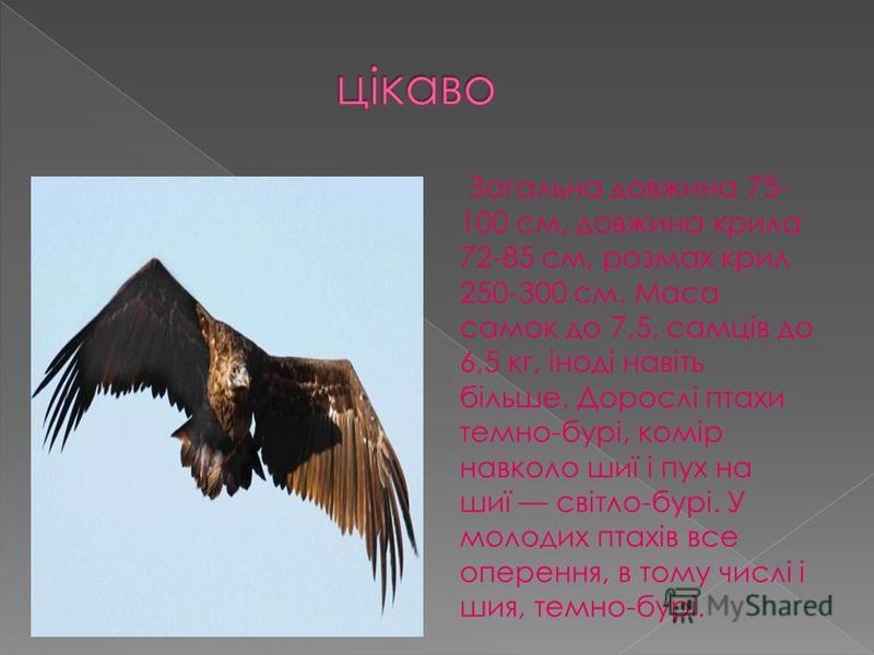 Загальна довжина 75- 100 см, довжина крила 72-85 см, розмах крил 250-300 см. Маса самок до 7,5, самців до 6,5 кг, іноді навіть більше. Дорослі птахи темно-бурі, комір навколо шиї і пух на шиї світло-бурі. У молодих птахів все оперення, в тому числі і