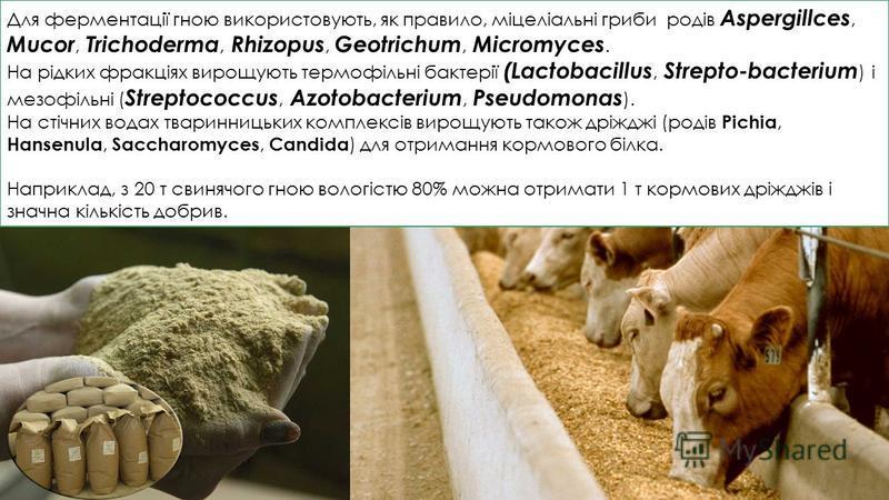 Для ферментації гною використовують, як правило, міцеліальні гриби родів Aspergillces, Mucor, Trichoderma, Rhizopus, Geotrichum, Micromyces. На рідких фракціях вирощують термофільні бактерії (Lactobacillus, Strepto-bacterium ) і мезофільні ( Streptoc