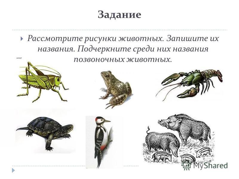 Задание Рассмотрите рисунки животных. Запишите их названия. Подчеркните среди них названия позвоночных животных.
