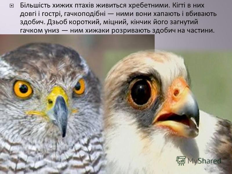 Більшість хижих птахів живиться хребетними. Кігті в них довгі і гострі, гачкоподібні ними вони хапають і вбивають здобич. Дзьоб короткий, міцний, кінчик його загнутий гачком униз ним хижаки розривають здобич на частини.