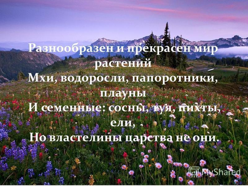 Разнообразен и прекрасен мир растений Мхи, водоросли, папоротники, плауны И сеименные: сосны, туя, пихты, ели, Но властелины царства не они.
