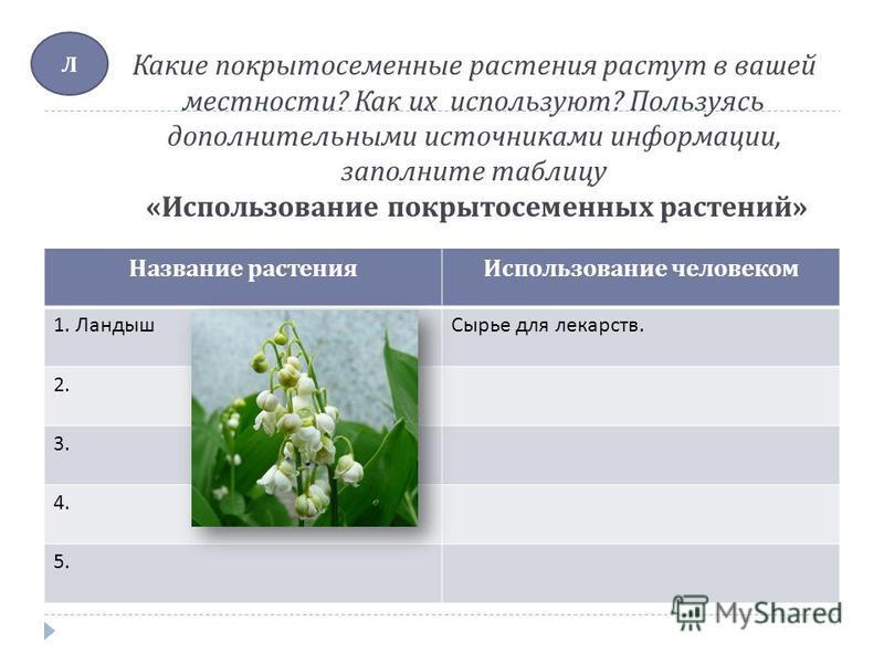 Какие покрытосеименные растения растут в вашей местности ? Как их используют ? Пользуясь дополнительными источниками информации, заполните таблицу « Использование покрытосеменных растений » Название растения Использование человеком 1. Ландыш Сырье дл