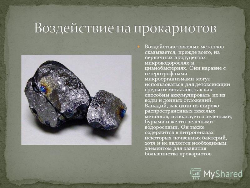 Воздействие тяжелых металлов сказывается, прежде всего, на первичных продуцентах - микро водорослях и цианобактериях. Они наравне с гетеротрофными микроорганизмами могут использоваться для детоксикации среды от металлов, так как способны аккумулирова