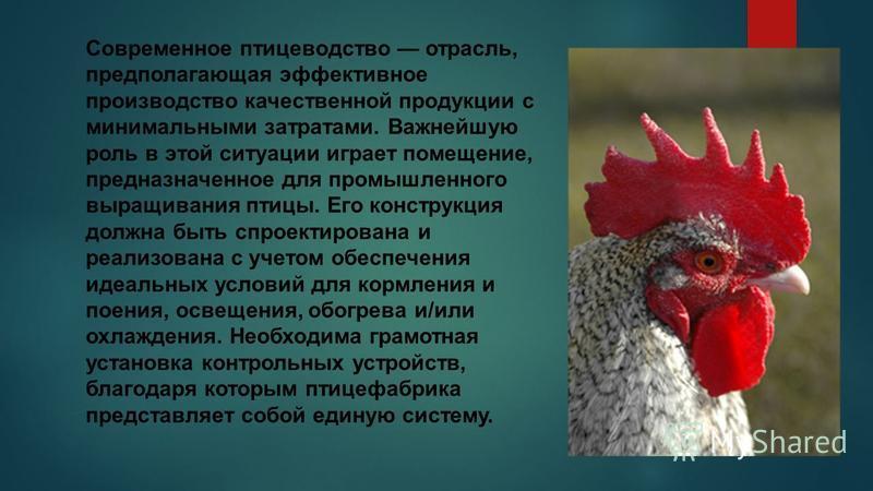 Современное птицеводство отрасль, предполагающая эффективное производство качественной продукции с минимальными затратами. Важнейшую роль в этой ситуации играет помещение, предназначенное для промышленного выращивания птицы. Его конструкция должна бы