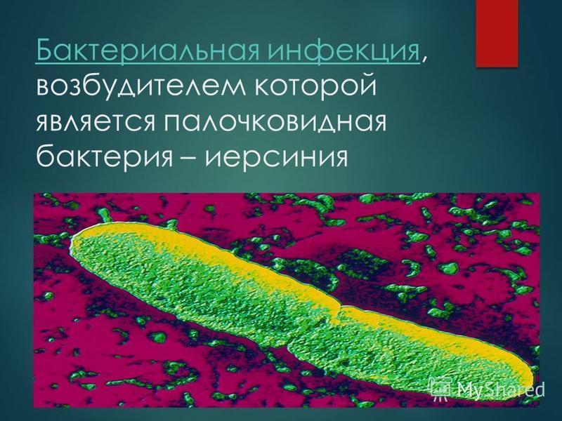 Бактериальная инфекция Бактериальная инфекция, возбудителем которой является палочковидная бактерия – йерсиния