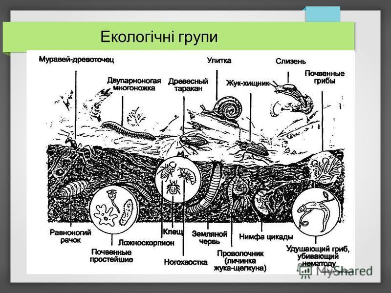 Екологічні групи