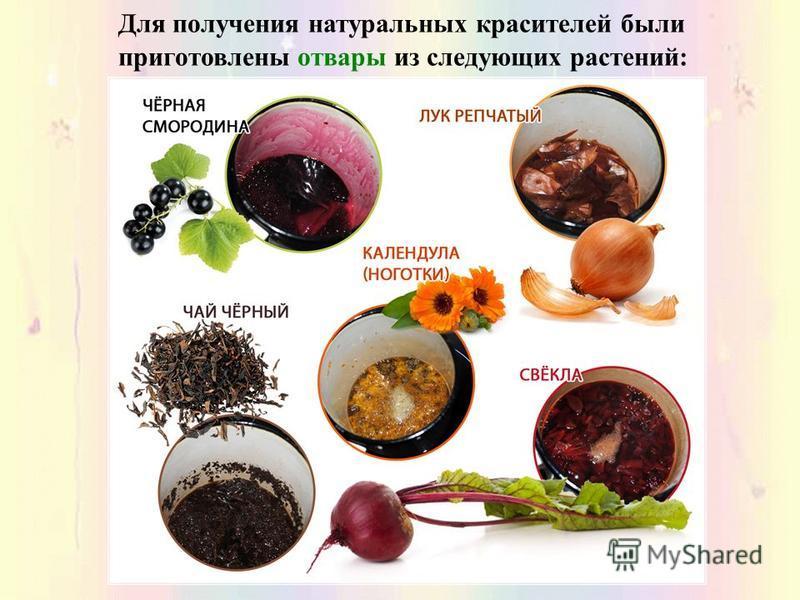 Для получения натуральных красителей были приготовлены отвары из следующих растений: