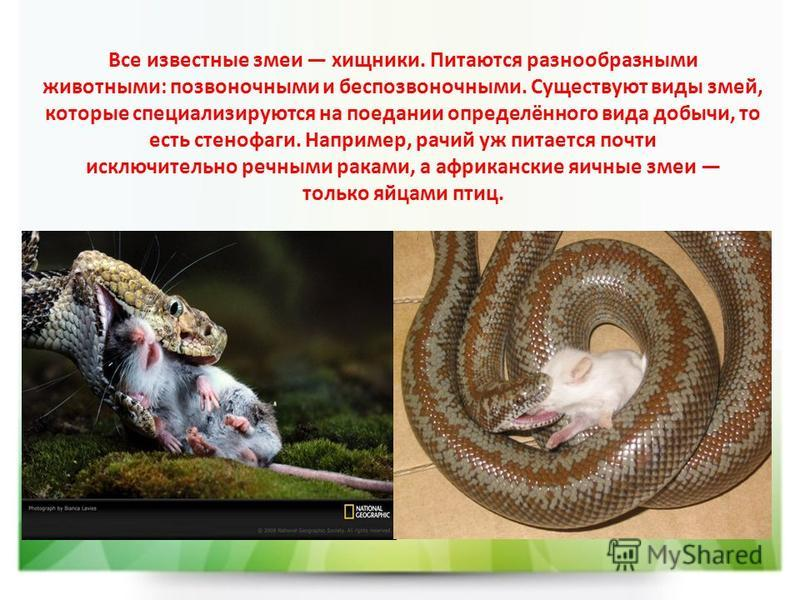 Все известные змеи хищники. Питаются разнообразными животными: позвоночными и беспозвоночными. Существуют виды змей, которые специализируются на поедании определённого вида добычи, то есть стенофаги. Например, рачий уж питается почти исключительно ре