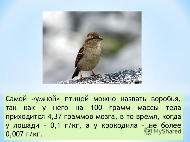 Самой «умной» птицей можно назвать воробья, так как у него на 100 грамм массы тела приходится 4,37 граммов мозга, в то время, когда у лошади – 0,1 г/кг, а у крокодила – не более 0,007 г/кг.