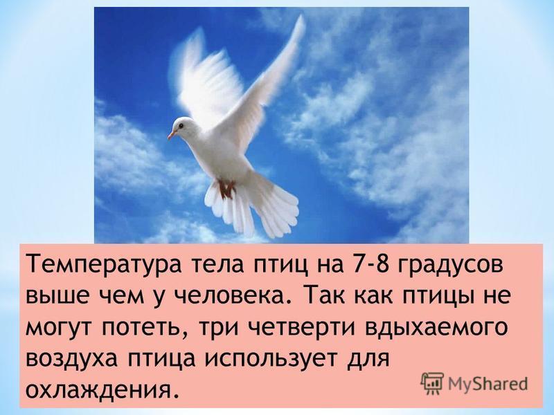 Температура тела птиц на 7-8 градусов выше чем у человека. Так как птицы не могут потеть, три четверти вдыхаемого воздуха птица использует для охлаждения.