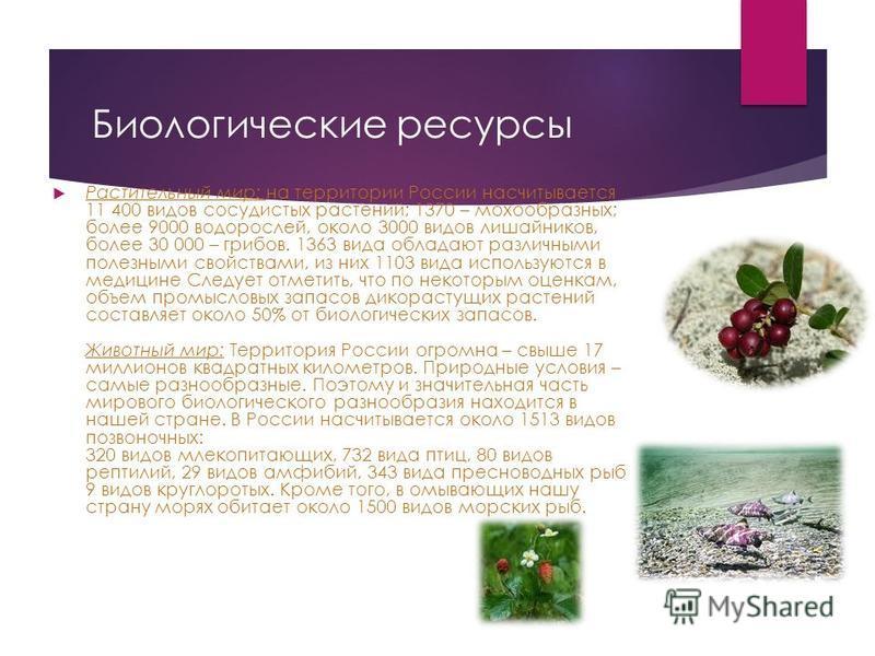 Биологические ресурсы Растительный мир: на территории России насчитывается 11 400 видов сосудистых растений; 1370 – мохообразных; более 9000 водорослей, около 3000 видов лишайников, более 30 000 – грибов. 1363 вида обладают различными полезными свойс