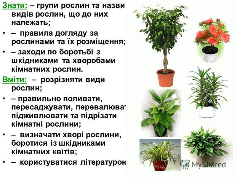 Знати: – групи рослин та назви видів рослин, що до них належать; – правила догляду за рослинами та їх розміщення; – заходи по боротьбі з шкідниками та хворобами кімнатних рослин. Вміти: – розрізняти види рослин; – правильно поливати, пересаджувати, п