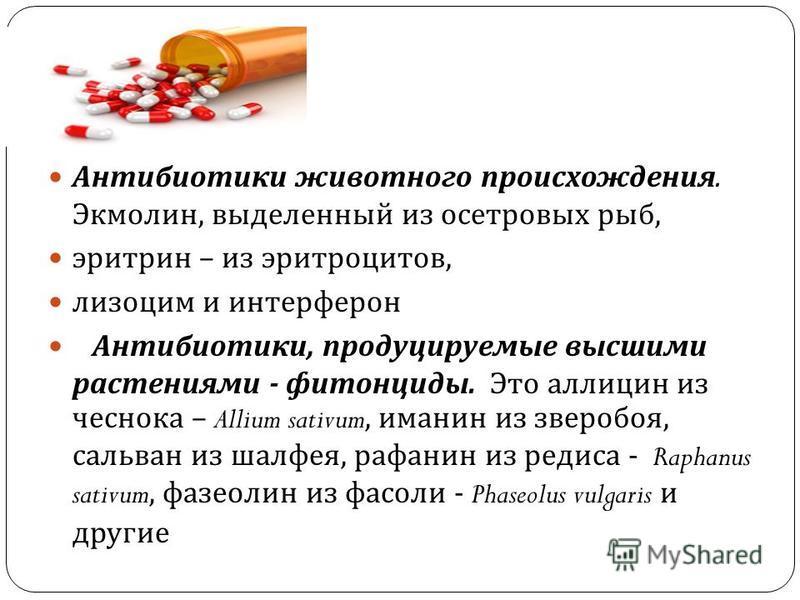 Антибиотики животного происхождения. Экмолин, выделенный из осетровых рыб, эритрин – из эритроцитов, лизоцим и интерферон Антибиотики, продуцируемые высшими растениями - фитонциды. Это аллицин из чеснока – Allium sativum, именин из зверобоя, сальван