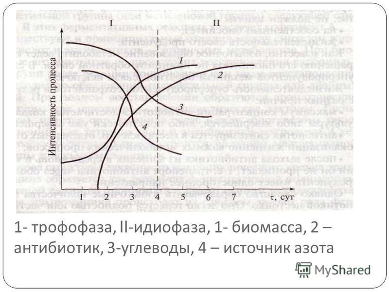 1- трофофаза, II- идиофаза, 1- биомасса, 2 – антибиотик, 3- углеводы, 4 – источник азота