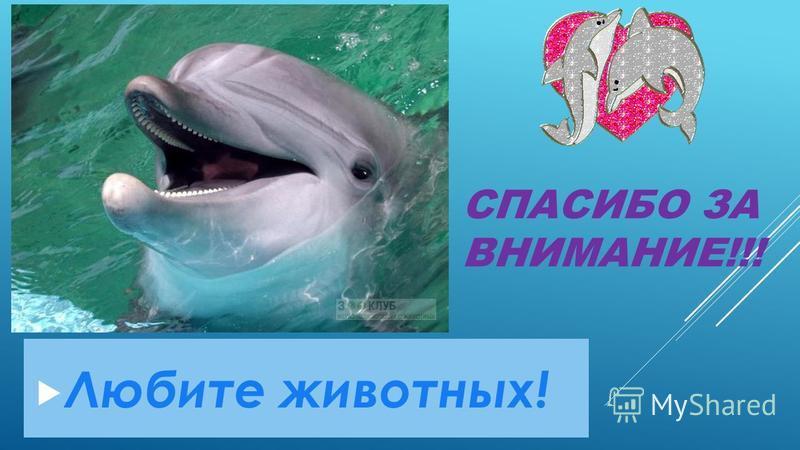 СПАСИБО ЗА ВНИМАНИЕ!!! Любите животных!