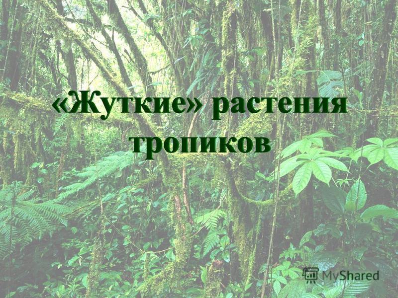 «Жуткие» растения тропиков