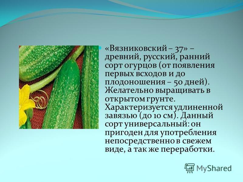 «Вязниковский – 37» – древний, русский, ранний сорт огурцов (от появления первых всходов и до плодоношения – 50 дней). Желательно выращивать в открытом грунте. Характеризуется удлиненной завязью (до 10 см). Данный сорт универсальный: он пригоден для