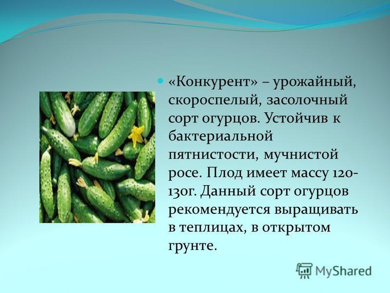 «Конкурент» – урожайный, скороспелый, засолочный сорт огурцов. Устойчив к бактериальной пятнистости, мучнистой росе. Плод имеет массу 120- 130 г. Данный сорт огурцов рекомендуется выращивать в теплицах, в открытом грунте.