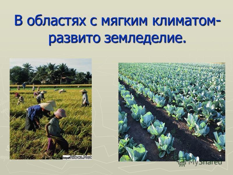 В областях с мягким климатом- развито земледелие.