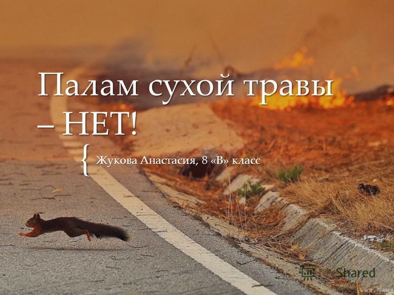 { Палам сухой травы – НЕТ! Жукова Анастасия, 8 «В» класс