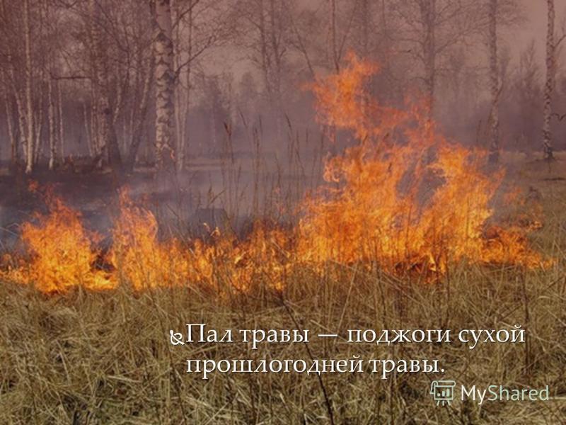 Пал травы поджоги сухой прошлогодней травы. Пал травы поджоги сухой прошлогодней травы.