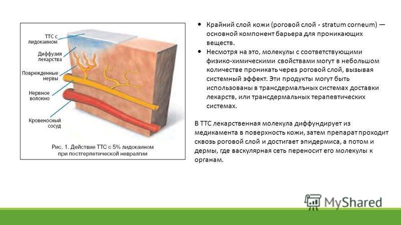 Крайний слой кожи (роговой слой - stratum corneum) основной компонент барьера для проникающих веществ. Несмотря на это, молекулы с соответствующими физико-химическими свойствами могут в небольшом количестве проникать через роговой слой, вызывая систе