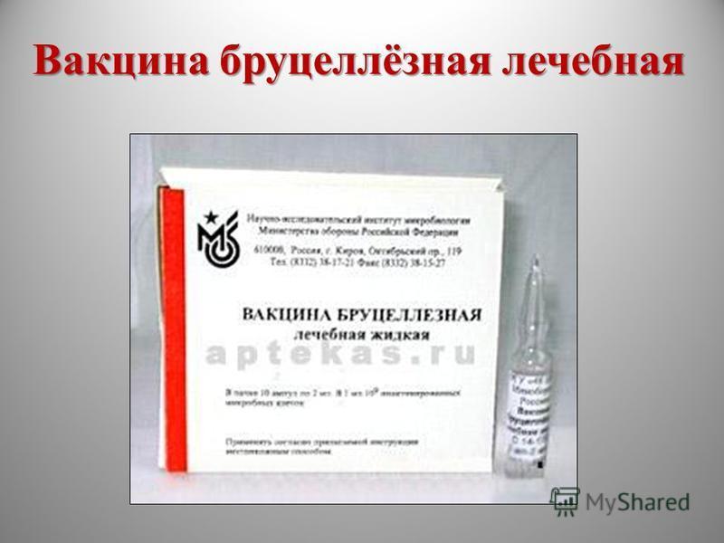 Вакцина бруцеллёзная лечебная