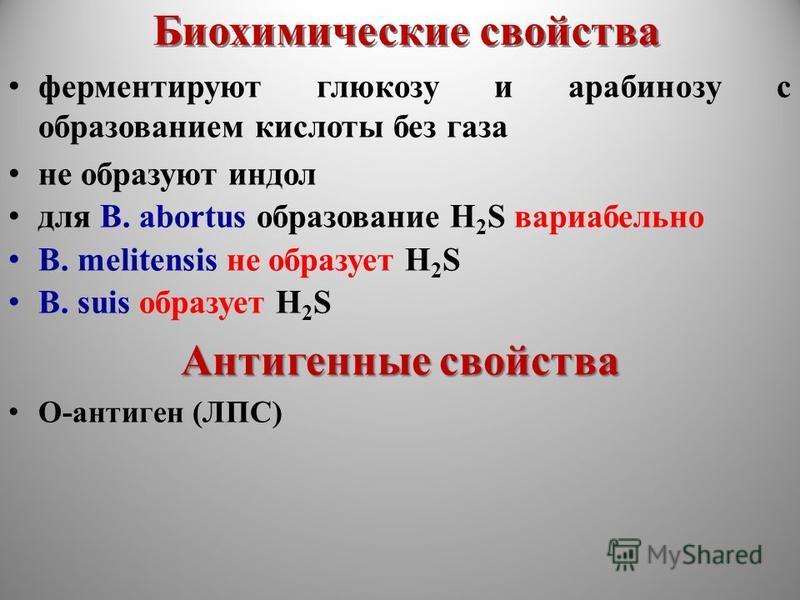 Биохимические свойства ферментируют глюкозу и арабинозу с образованием кислоты без газа не образуют индол для B. abortus образование H 2 S вариабельно B. melitensis не образует H 2 S B. suis образует H 2 S Антигенные свойства О-антиген (ЛПС)