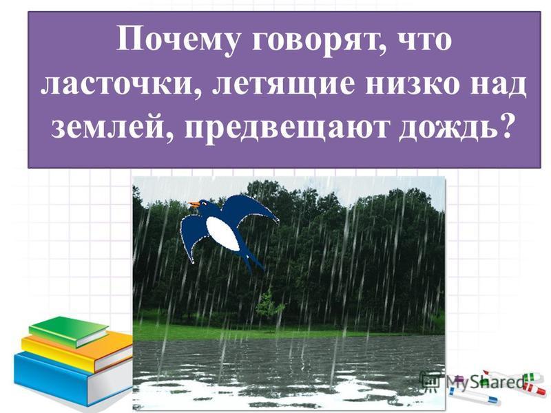 Почему говорят, что ласточки, летящие низко над землей, предвещают дождь?