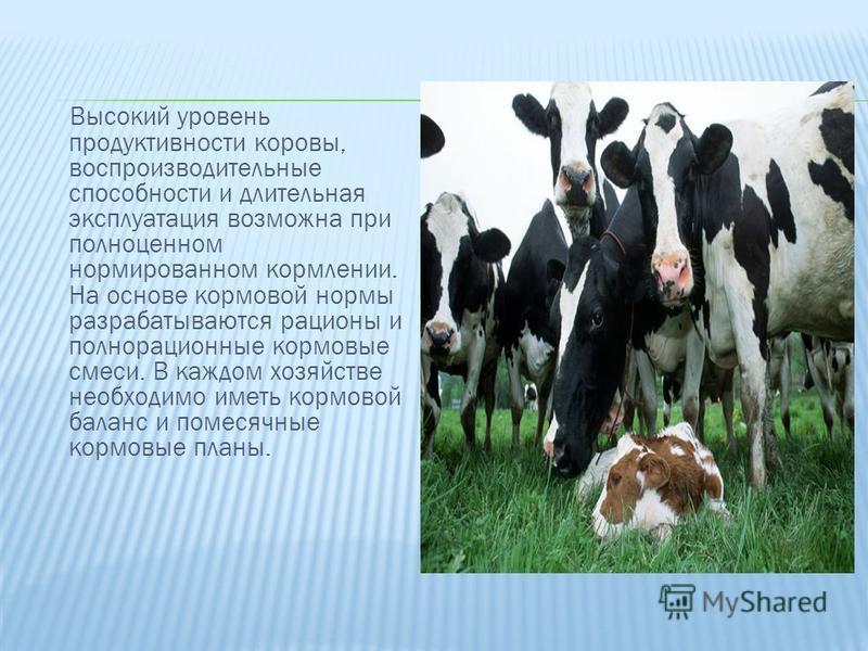 Высокий уровень продуктивности коровы, воспроизводительные способности и длительная эксплуатация возможна при полноценном нормированном кормлении. На основе кормовой нормы разрабатываются рационы и полнорационные кормовые смеси. В каждом хозяйстве не