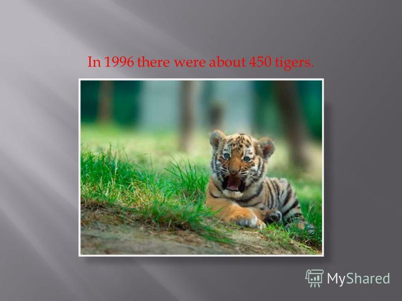In 1996 there were about 450 tigers.