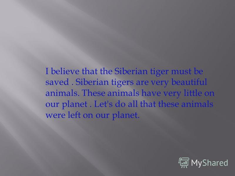 I believe that the Siberian tiger must be saved. Siberian tigers are very beautiful animals. These animals have very little on our planet. Let's do all that these animals were left on our planet.