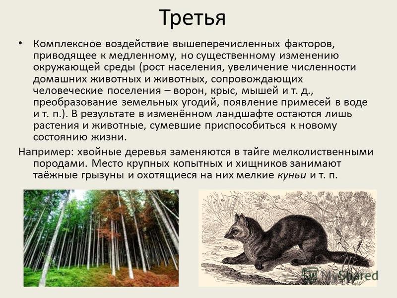 Комплексное воздействие вышеперечисленных факторов, приводящее к медленному, но существенному изменению окружающей среды (рост населения, увеличение численности домашних животных и животных, сопровождающих человеческие поселения – ворон, крыс, мышей
