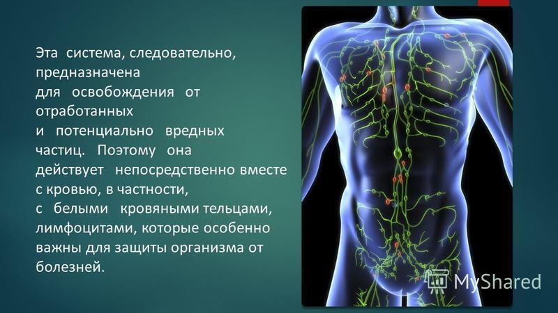 Эта система, следовательно, предназначена для освобождения от отработанных и потенциально вредных частиц. Поэтому она действует непосредственно вместе с кровью, в частности, с белыми кровяными тельцами, лимфоцитами, которые особенно важны для защиты