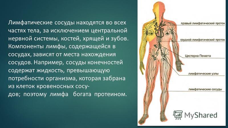 Лимфатические сосуды находятся во всех частях тела, за исключением центральной нервной системы, костей, хрящей и зубов. Компоненты лимфы, содержащейся в сосудах, зависят от места нахождения сосудов. Например, сосуды конечностей содержат жидкость, пре