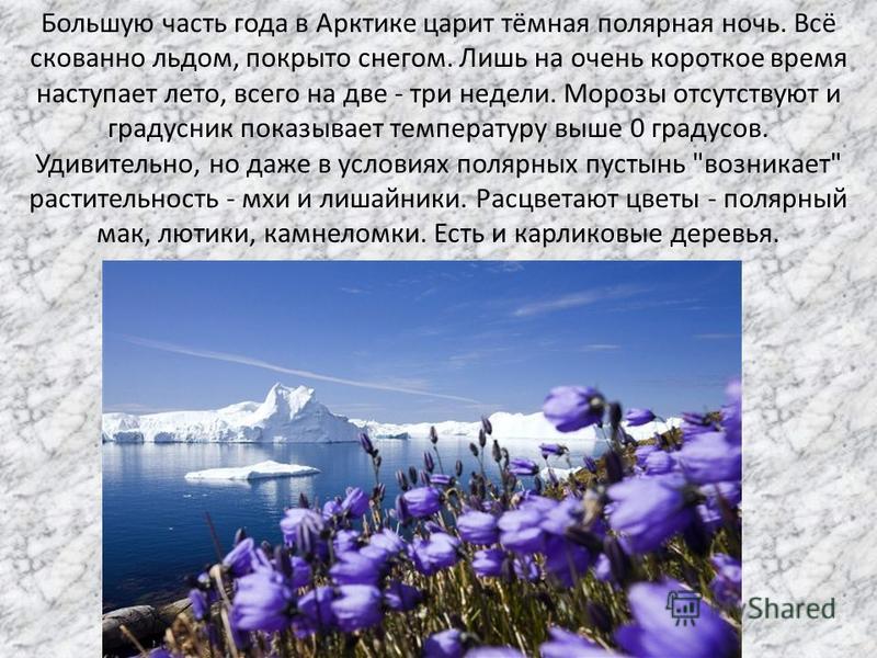 Большую часть года в Арктике царит тёмная полярная ночь. Всё скованно льдом, покрыто снегом. Лишь на очень короткое время наступает лето, всего на две - три недели. Морозы отсутствуют и градусник показывает температуру выше 0 градусов. Удивительно, н
