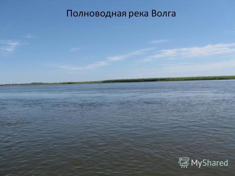 Полноводная река Волга